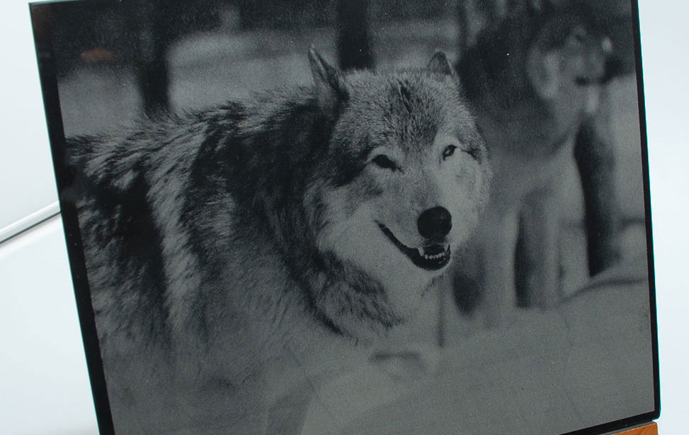 Wolf Photo Engraved on Marble